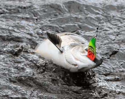 Снасти для ловли семги